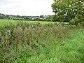 Grazing land , Wickridge Street - geograph.org.uk - 940530.jpg