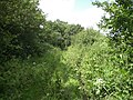 Green lane from Great Snoring to Little Walsingham - geograph.org.uk - 472773.jpg