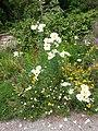Greenway Pflanze2.jpeg