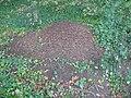 Große Rote Waldameise, Ameisenhaufen am Geschwister-Scholl-Weg Ruhland, 01.jpg