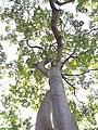 HK CWB 銅鑼灣 Causeway Bay 維多利亞公園 Victoria Park tree trunk n green leaves December 2019 SSG 46.jpg
