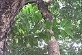 HK CWB 高士威道 Causeway Bay Road 維多利亞公園 Victoria Park tree Sept 2017 IX1 38.jpg
