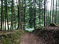 Habichtswaldsteig Grenzsteinpfad Hohlweg.JPG