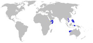 Speckled catshark Species of shark