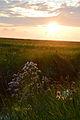 Hallig Hooge Sonnenuntergang 02.jpg
