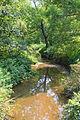 Hallowing Run looking downstream.JPG