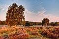 Haltern am See, Westruper Heide -- 2015 -- 8331-5.jpg