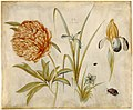 Hans Hoffmann Flowers and beetles 1582.jpg