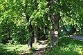 Hausschachenalle in Weitra 02 2014-05 NÖ-Naturdenkmal GD-051.jpg