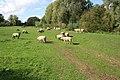 Hay Meadow, Egleton - geograph.org.uk - 246332.jpg
