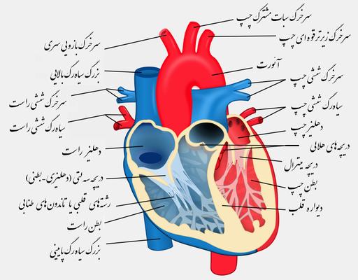 Heart diagram-fa