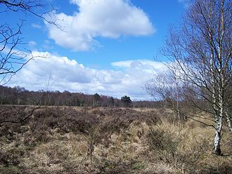 Sutton Park, West Midlands - Heathland area in Sutton Park