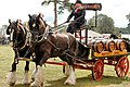 Heavy Horses - Bedfordshire Steam & Country Fayre 2017 (37308504635).jpg