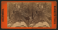Hercules prostrate, 325 feet long, 97 feet in circumference, from Robert N. Dennis collection of stereoscopic views.png