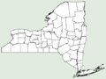 Hibiscus laevis NY-dist-map.png