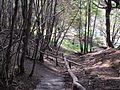 Hidden trail (8580247788).jpg