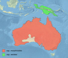 Hieraaetus morphnoides distribution map.png