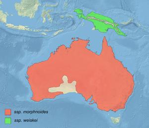Little eagle - Image: Hieraaetus morphnoides distribution map