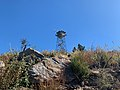 High Point Fire Tower on Palomar Mountain.jpg