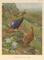 Himalayan Impeyan Pheasant by Charles Knight.png