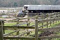 Home Farm - geograph.org.uk - 1189314.jpg