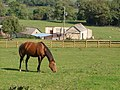 Horse at Back Allers - geograph.org.uk - 248963.jpg