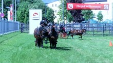 Datei:Horse driving at Stiegl 2011.ogv