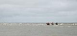 Horse shrimpers of Oostduinkerke (DSCF9733).jpg