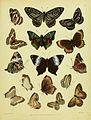 HorsfieldMoorCatalogueEastIndiaCompanyLepidoptera2PlateV.jpg