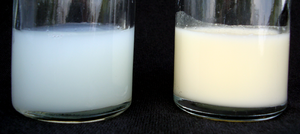 Two samples of human breast milk.