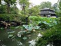 Humble Administrator's Garden, Suzhou, China (2016-08-20) - 13.jpg