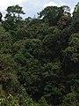 Hutan Alam Mandi Angin Minas Riau 09.jpg
