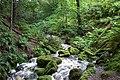 Inlet stream - geograph.org.uk - 1086582.jpg