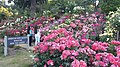Int. Rose Test Garden, PDX, 2017 - 5.jpg