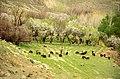 Iran - Chadegan ^ Zayandehroud - panoramio.jpg