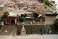 Itsukushima-jinja in Motomachi met een kersenboom in bloei, -7 april 2011.jpg