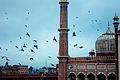 Jama masjid birds, delhi.jpg