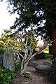 Japanese Friendship Garden (4527079908).jpg