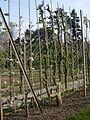 Jardin-A kahn 20.JPG