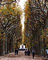 Jardin Des Plantes (52718772).jpeg