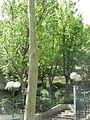 Jardin de la rue Poliveau 02.JPG