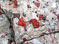 Jasper-quartz pebble conglomerate (Lorrain Formation, Paleoproterozoic, ~2.3 Ga; Ottertail Lake Northeast roadcut, near Bruce Mines, Ontario, Canada) 64 (46793489735).jpg