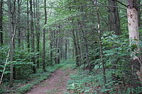 Joseph E. Ibberson Conservation Area.jpg