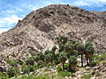 Joshua Tree National Park - 49 Palms Oasis - 01.jpg