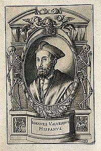 Juan Valverde de Hamusco. Line engraving by N. Beatrizet, 15 Wellcome V0005974.jpg