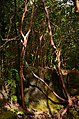 Jungle in the morning light (a0005250) - panoramio.jpg