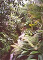 Jungle stream, Eden Project, St Blaise CP - geograph.org.uk - 655391.jpg