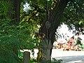 Křížek v Kovářově - panoramio (1).jpg