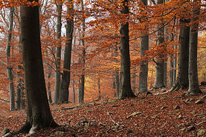 History of the forest in Central Europe - Křivoklátsko forest in central Bohemia, Czech Republic