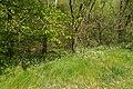 Kalletal - 2015-05-02 - LIP-032 Abgrabung Stemmen (03).jpg